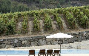 Dão: uma região de vinhos com histórias
